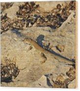 Schreiber's Fringe-fingered Lizard Wood Print