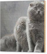Scottish Fold Cats Wood Print by Evgeniy Lankin