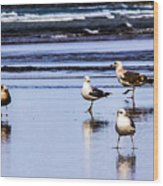 Sea Birds Wood Print