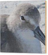 Sea Birds Sanibel Island Wood Print