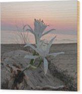 Summer Sea Lilies Wood Print