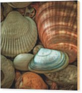 Sea Pebbles With Shells Wood Print