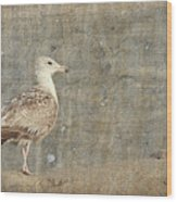 Seagull - Jersey Shore Wood Print