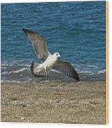 Seagull Landing Wood Print