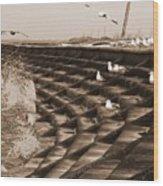 Seagulls And Pelicans On Lake Pontchartrain Wood Print