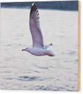 Seagulls Flying Wood Print