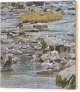 Seagulls On The Rocks Wood Print