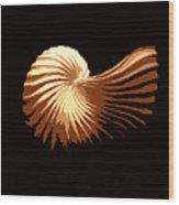 Seashell 1 Wood Print