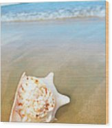 Seashell Wood Print
