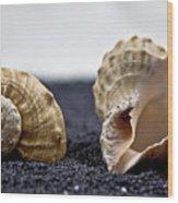 Seashells On Black Sand Wood Print
