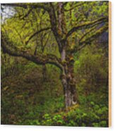 Secluded Tree Wood Print