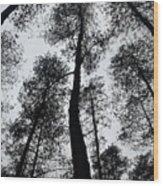 See Of Darkness Wood Print