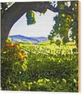 Shady Vineyard Wood Print