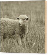 Sheep In A Meadow Wood Print