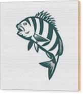 Sheepshead Fish Jumping Isolated Retro Wood Print