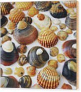 Shell Background Wood Print