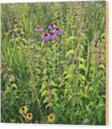 Shelley Kelly Prairie Wildflowers Wood Print