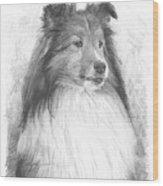 Sheltie Pencil Portrait Wood Print