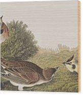 Shore Lark Wood Print
