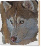 Siberian Husky Wood Print by Larry Linton