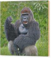 1- Silverback Western Lowland Gorilla  Wood Print