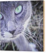Skitty Cat Wood Print