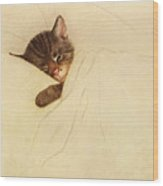 Sleep Like A Kitten Wood Print