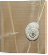 Snail On Autum Grass Blade Wood Print