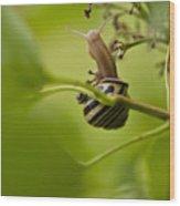 Snail Stretching Wood Print