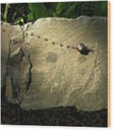 Snail Trail Wood Print