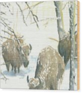 Snow Buffs Wood Print