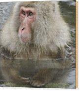Snow Monkey Bath Wood Print