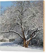 Snowy Tree Wood Print