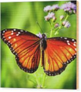 Soldier Butterfly Wood Print