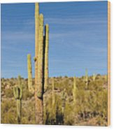 South Mountain Cactus Wood Print