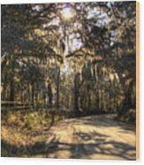 Southern Oak Shadows  Wood Print