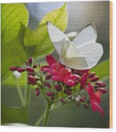 Southern White Butterfly  Wood Print