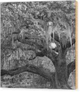 Sprawling Live Oak Wood Print