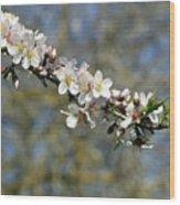 Spring Blooming. Wood Print