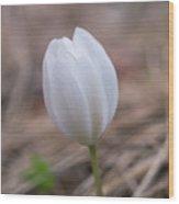 Spring Flower Wood Print