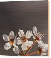 Spring Flowers Wood Print