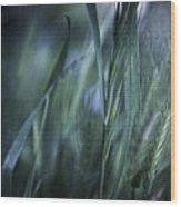 Spring Grass Emerging Wood Print