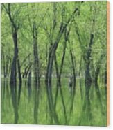 Spring Green Reflections  Wood Print by Lori Frisch