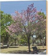 Spring In Winter Park Wood Print