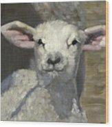 Spring Lamb Wood Print by John Reynolds