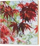 Spring Xxv Wood Print