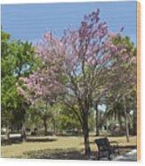 Spring Magnolia In Winter Park  Wood Print
