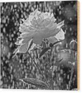 Spring Rain - 365-13 Wood Print