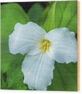 Spring Trillium Wood Print