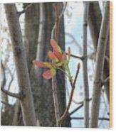 Spring Whirligig Wood Print